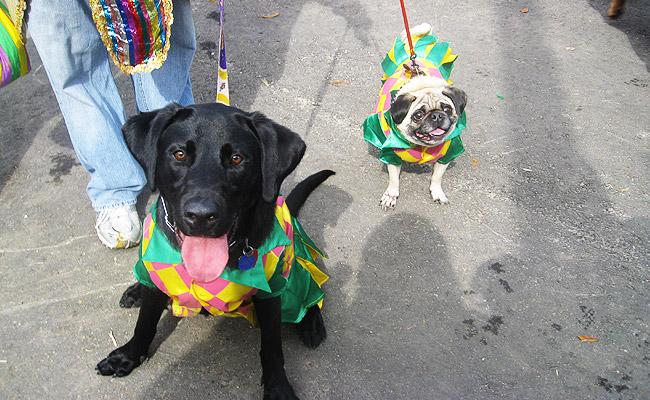 barkus-dogs-pic