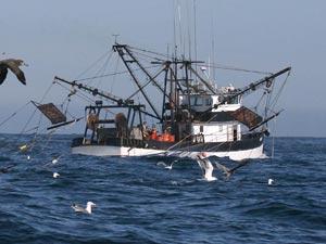 shrimp-boat-alt