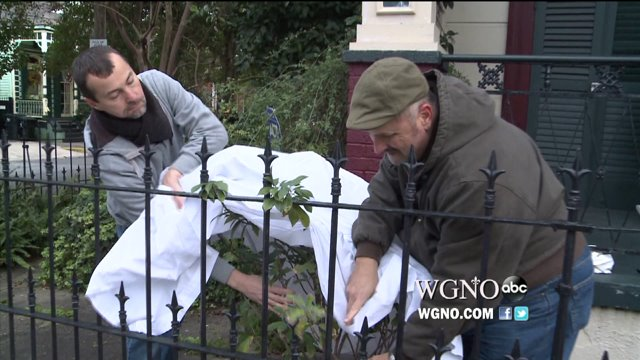 How New Orleanians Are Facing the Cold with Caution