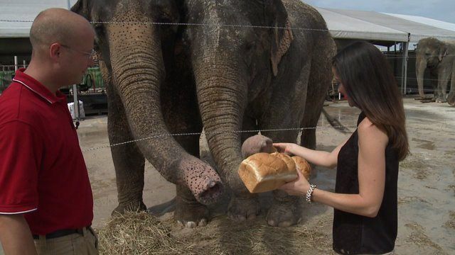 Behind the Scenes at The Circus: Meet the Elephants or 'The Divas' of the Show
