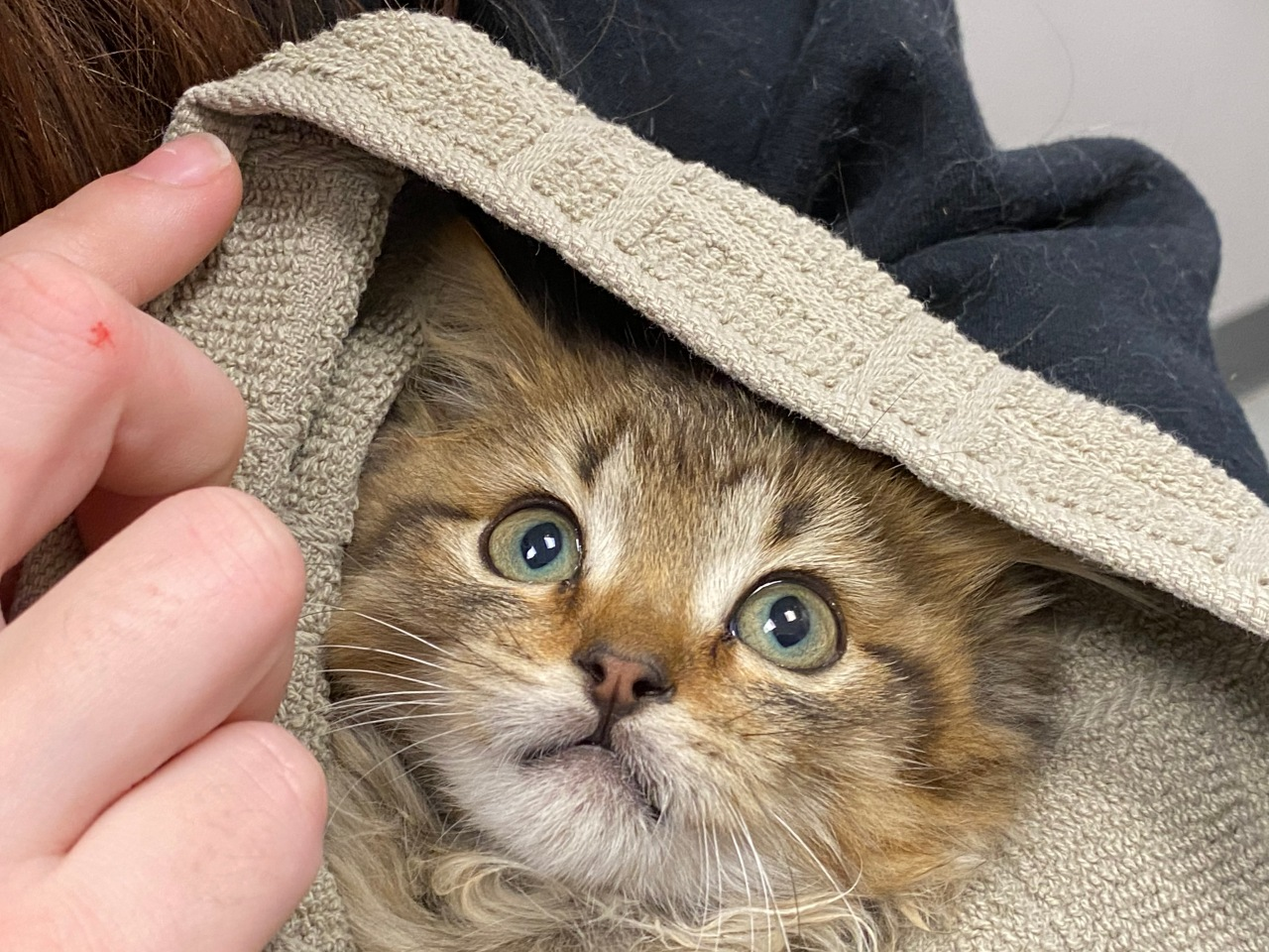 Good Samaritan saves kitten frozen to truck tire in Colorado