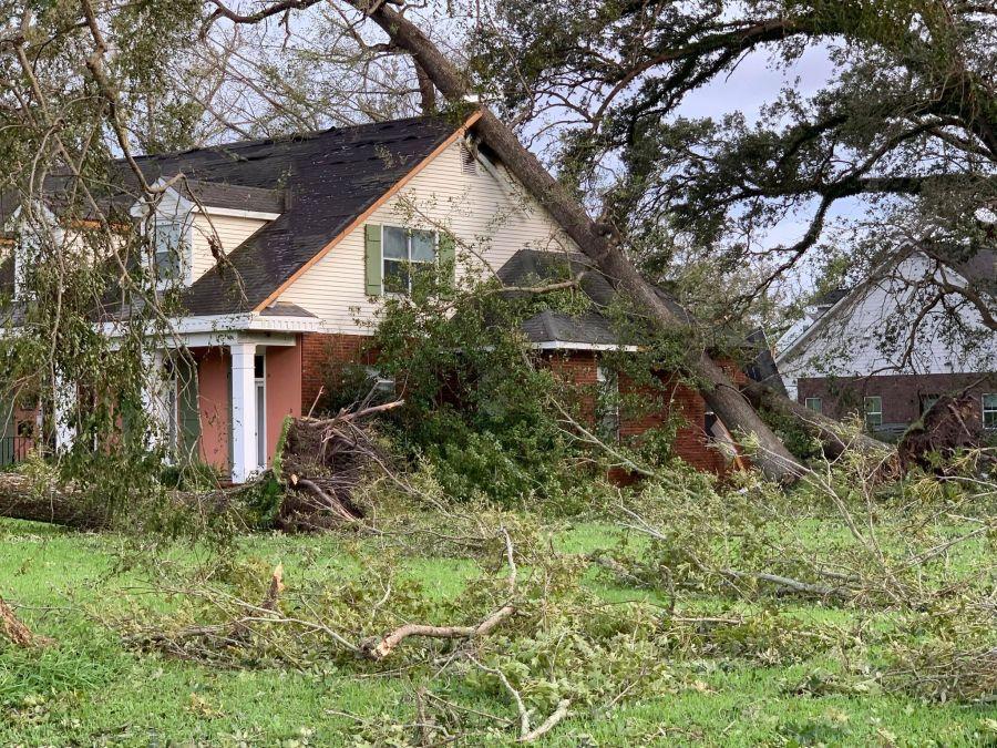 Fallen tree lands on home