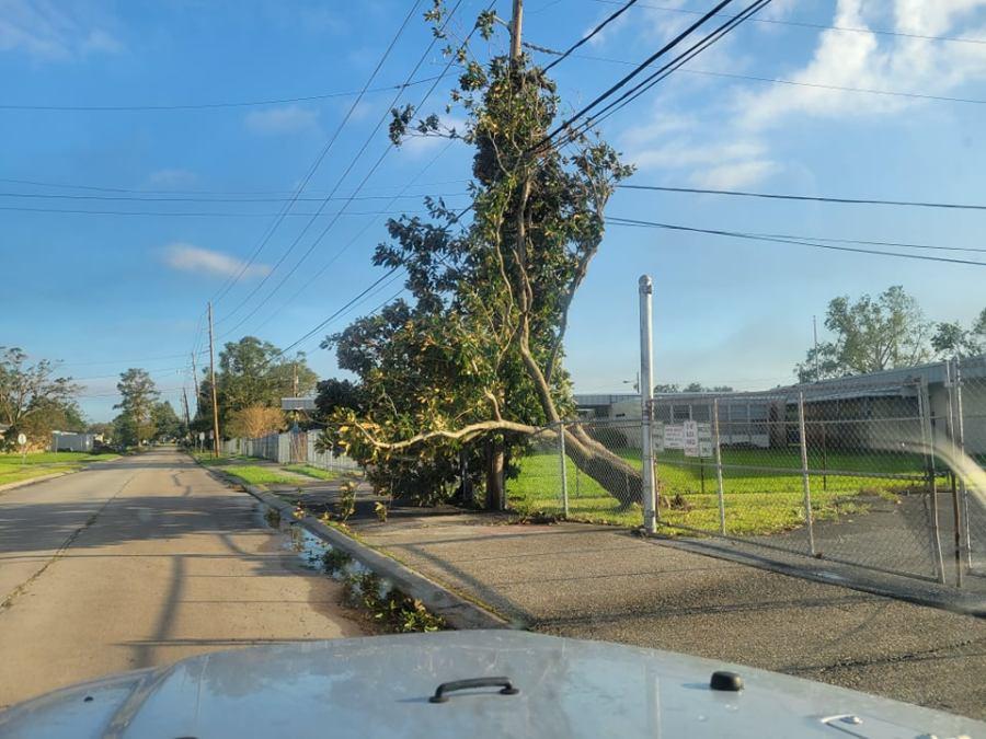 Downed Magnolia tree on Elise Avenue