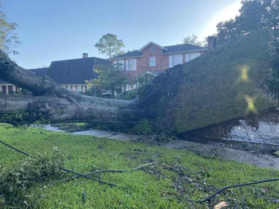 Massive tree down rips through concrete
