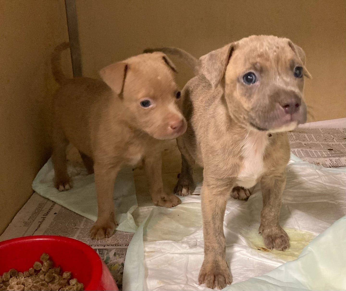 https://wgno.com/news/humane-society-rescue-team-rescues-5-puppies-from-65-foot-well/