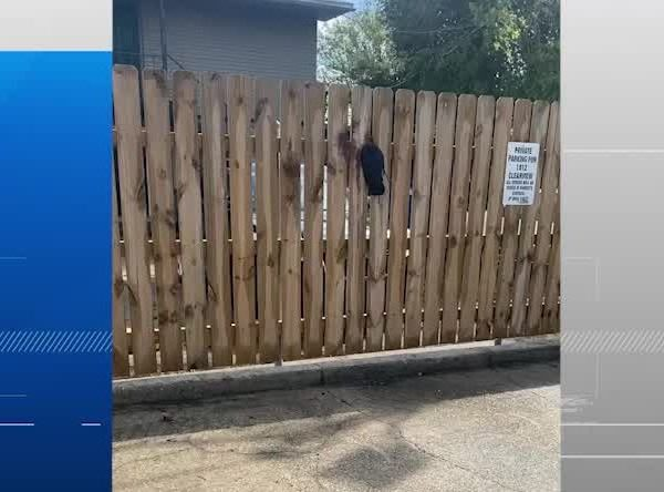 Crow stuck in fence